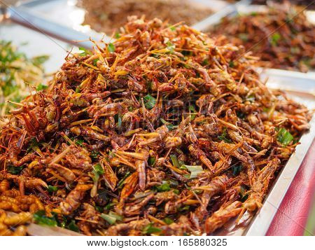 Exotic Asian food. fried insects in warm light condition