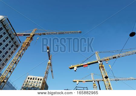 Sihouette of yellow cranes blue sky and high buildings