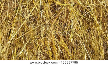 Straw texture ruminants animal food background. Abstract texture