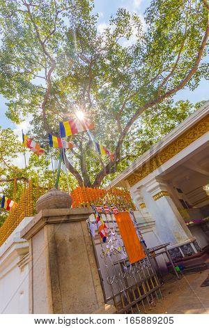 Anuradhapura Jaya Sri Maha Bodhi Tree Base V