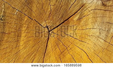 A cut of trunk tree with cracks