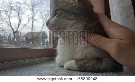 Beautiful cat sitting on window and looking far