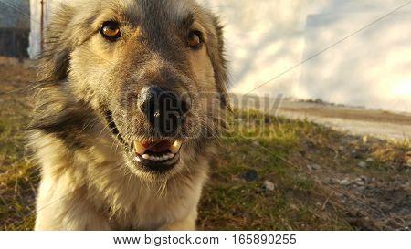 Cute young dog looking at the camera