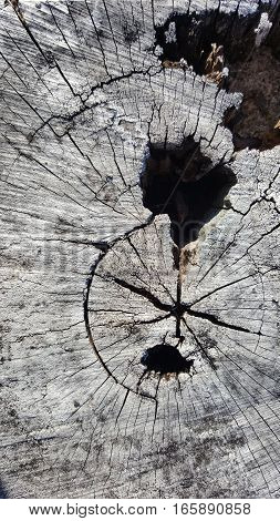 Texture of old tree stump with cracks and hole
