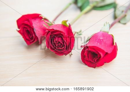 Beautiful Red rose flower on wooden background .