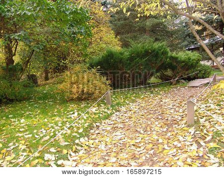 Traditional Japanese garden, Autumn season. The garden is attractive throughout the year, especially in late November and early December during the fall color season.
