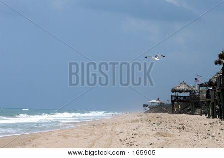 Gull At The Beach