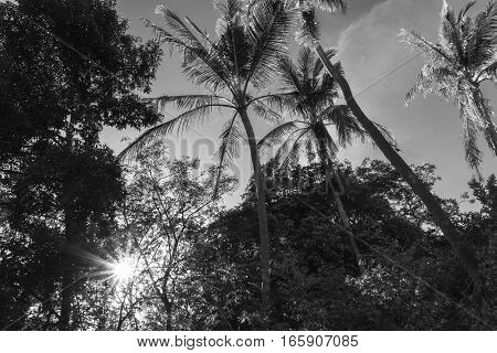 Sunshine seen thought palm trees in Thailand
