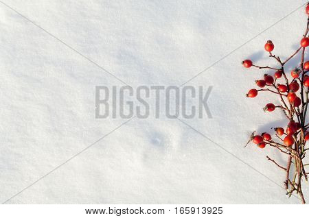 Winter snow background decorated with rose hip berries arranged red berries on snow