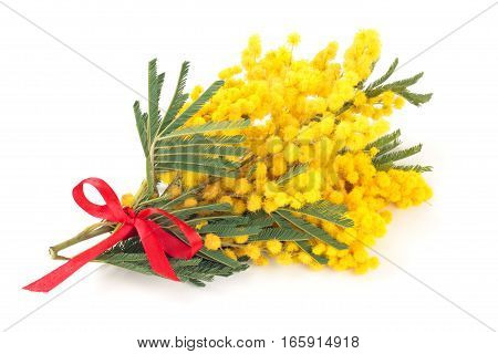 Branch Of Mimosa.