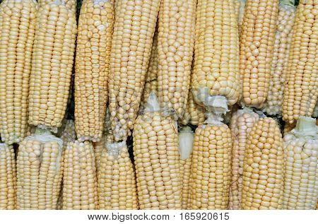 The background of fresh yellow corn cobs