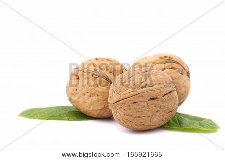 Closeup of a walnuts isolated on the white background.