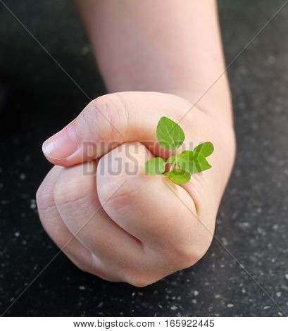 Ecology and Environment Concept Hand Protecting Carefully Young Plant to Growing in A New Place.