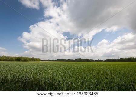 Typical flat and featureless agricultural crop land in Holland Europe.