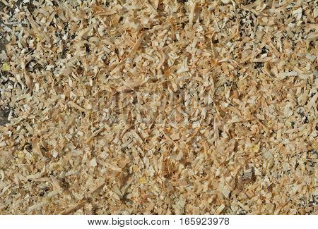 A close up of the sawdust (by motor-saw).