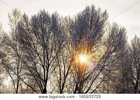 Tepid Winter Sunbeam Passes Through The Branches Of A Tree