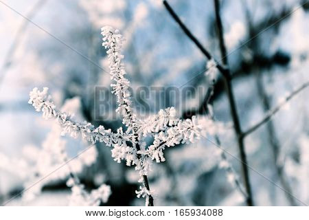 Macro Of A Twig With Snow