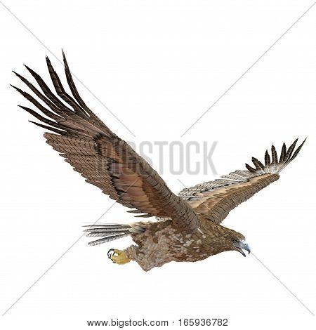 Gurney Eagle on white background. 3D illustration