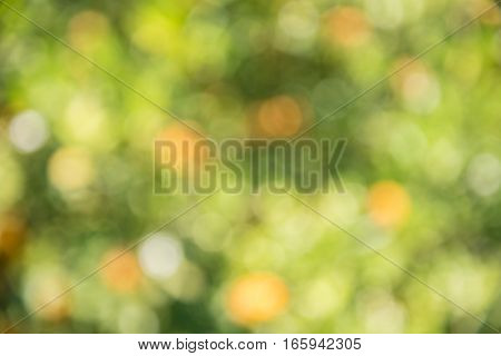 Abstract green and orange bokeh background (de-focused)