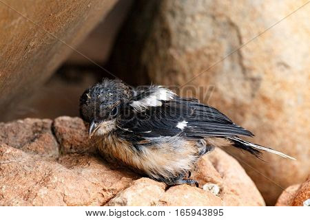 Small Bird Hiding On The Rocks