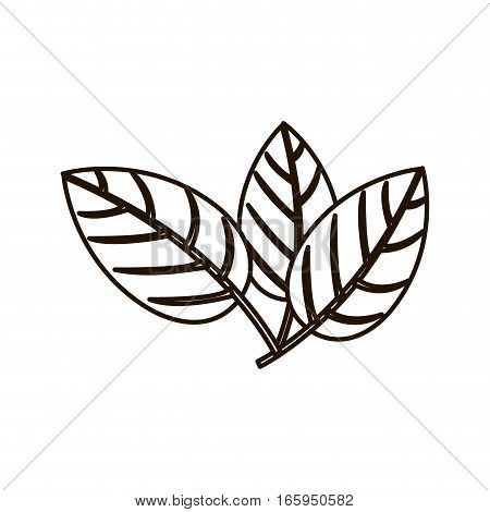silhouette three leaves with ramifications vector illustration