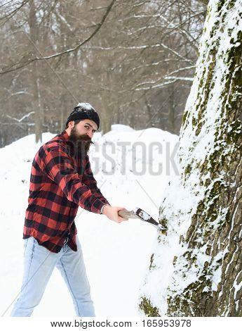 Handsome Man Lumberjack Cuts Tree