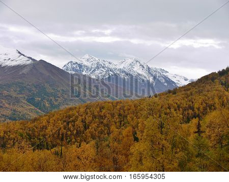 Cloudy day hiking in Alaska with a beautiful view of vivid fall colors and snow capped mountains. Fall or autumn day overlooking a forest of colorful trees.