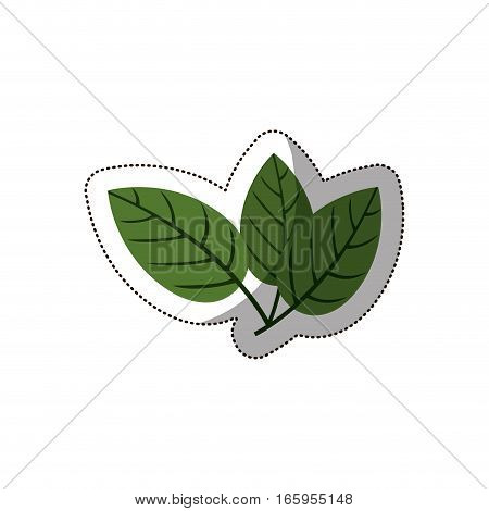 sticker green leaves with ramifications vector illustration