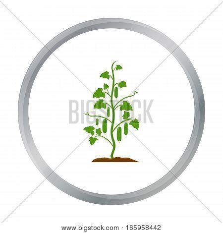 Cucumber icon cartoon. Single plant icon from the big farm, garden, agriculture cartoon. - stock vector