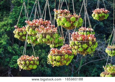 Hanging Basket Of Flowers