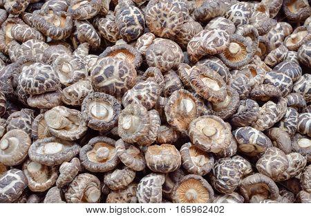 Raw Shiitake Mushroom Background, Healthy Food Concept