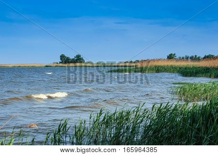 Reed and blue river, nature landscape background