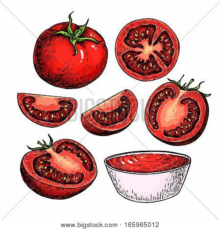 Tomato vector drawing set. Isolated tomato, sliced piece and tomato sauce. Vegetable artistic style illustration. Detailed vegetarian food sketch. Farm market product.  Great for label, banner, poster