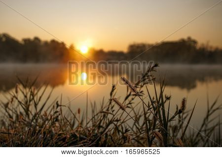 Lake Plant Grass In Early Morning