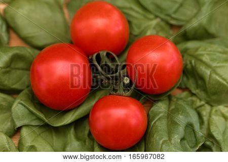 Macro photo of small tomatoes with basil leaves as background.