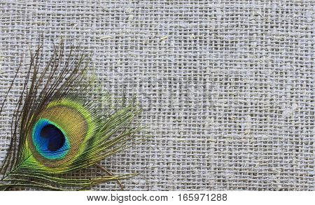 beautiful feather of a peacock's tail lying on the linen cloth