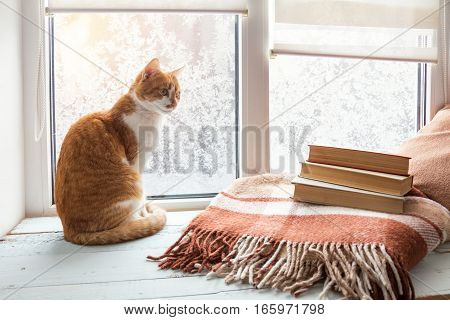 Red-white Cat On Windowsill