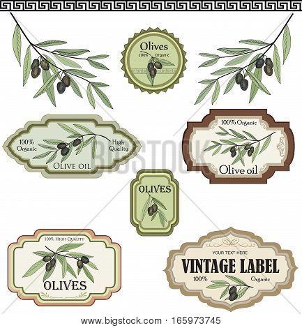Vintage olive labels set. Vegetable spice mediterranean cuisine floral colored sketch. Food decor collection