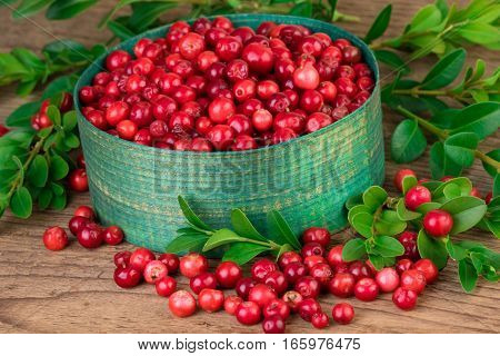 Cranberries close-up. Green basket with fresh cranberries lingonberries on old wooden background