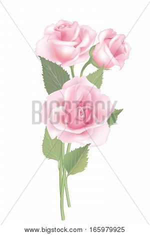 Flower rose bouquet isolated on white background. Floral decor. Good for greeting crad, birthday, wed, save a date note