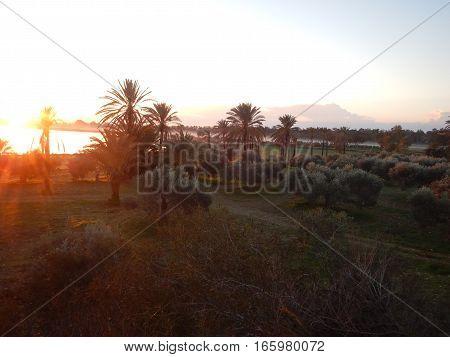 Sunrise At Larnaka Salt Lake With Palm Trees
