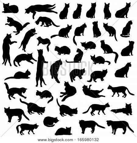 Cat set. Cats pose silhouette collection. Animal over white background.