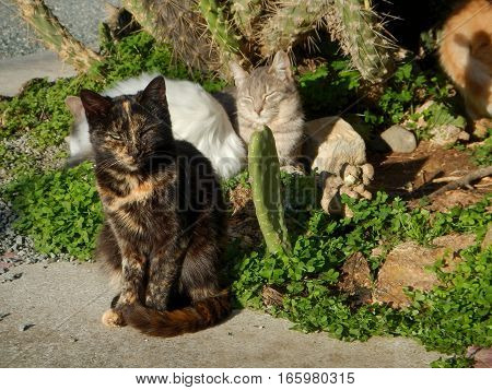 Many Cats Half Domesticated In Cyprus