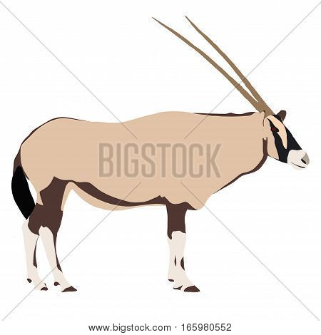 Oryx From Side, Drawn Illustration