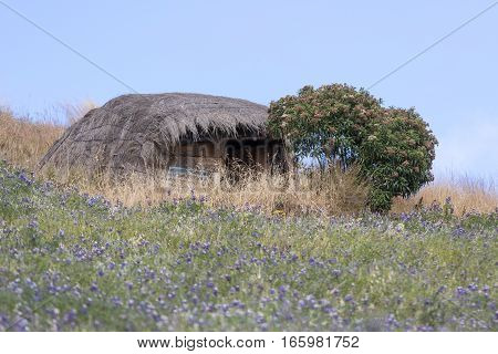 a small indigenous straw home in Ecuador with flowers around