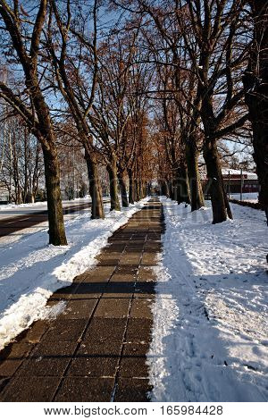 Linden alley in winter with snow pavement