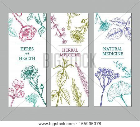 Sketch herbal vertical banners with medicinal organic herbs valuable for human health vector illustration