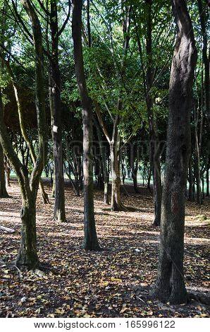 Forest In The Simon Bolivar Park
