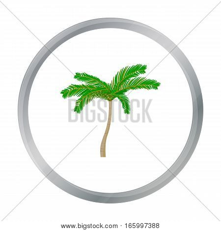 Mexican fan palm icon in cartoon style isolated on white background. Mexico country symbol vector illustration. - stock vector