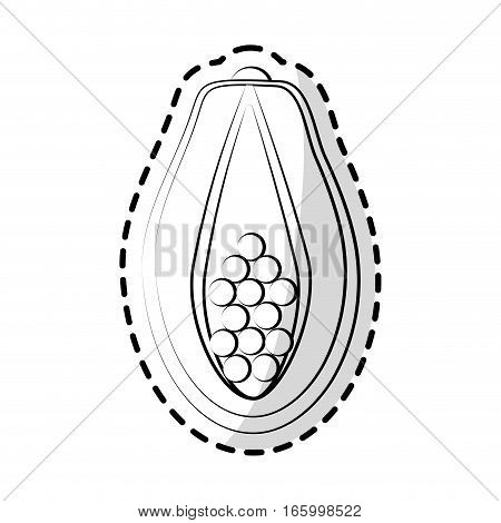 paw paw fruit icon over white background. vector illustration